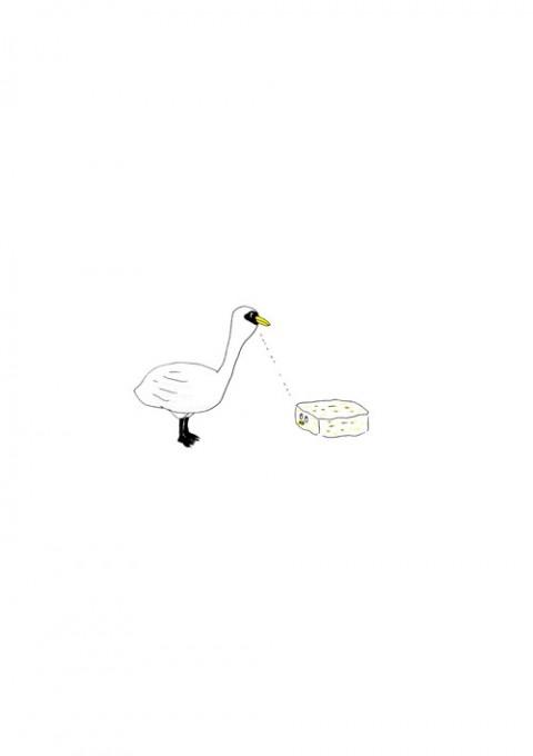 Swan & Tofu