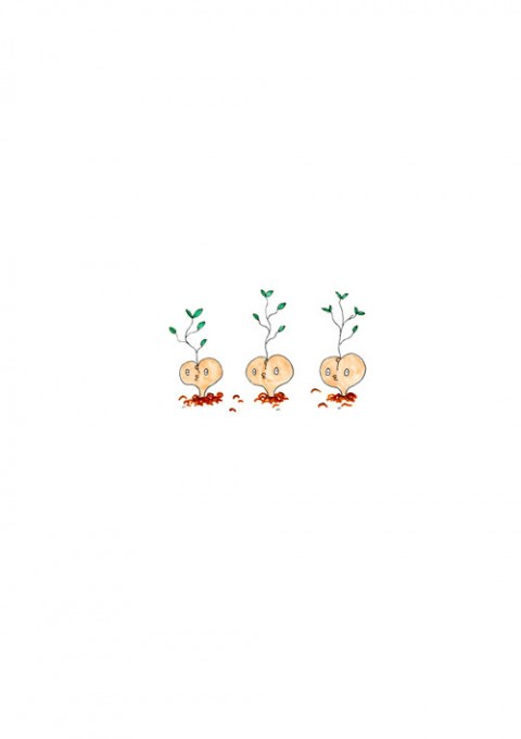 Hip Seed