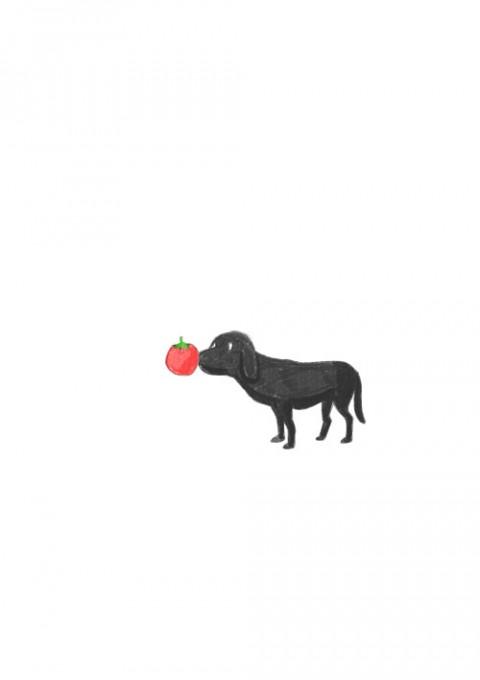 Tomato Nose Dog