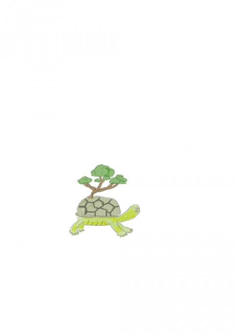 Bonasi Turtle
