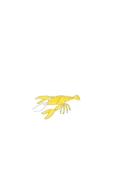 Golden Crayfish
