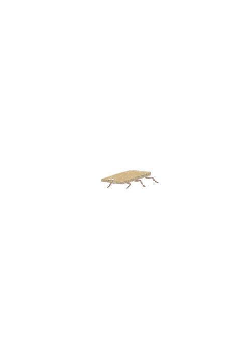Cardboard Cockroach